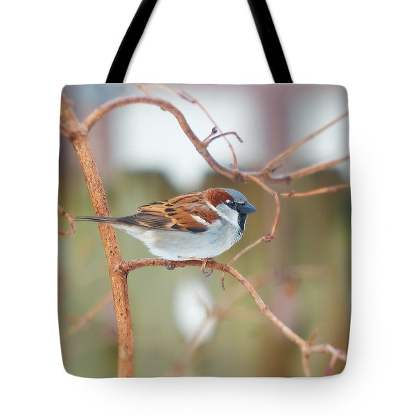Winter Sparrow Tote Bag
