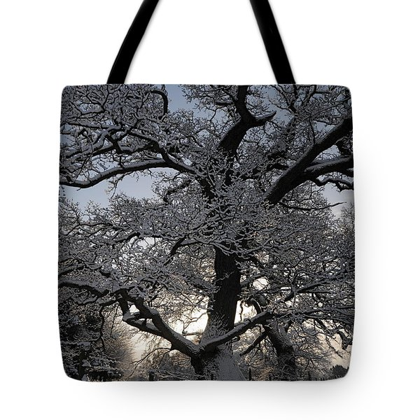 Winter Tree In North Wales Tote Bag