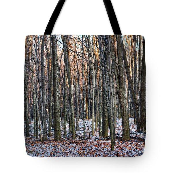 Winter - Uw Arboretum Madison Wisconsin Tote Bag