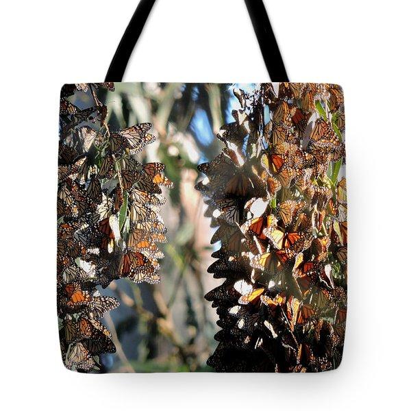Wintering In Santa Cruz Tote Bag