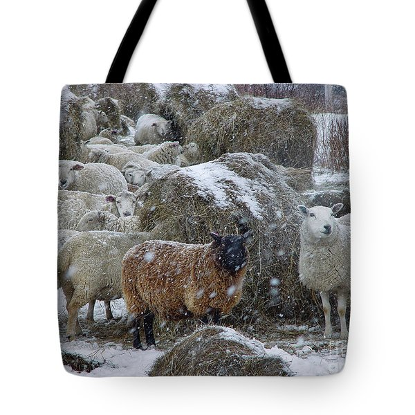 Wintering Sheep Tote Bag