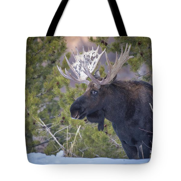 Winter's Arrival  Tote Bag