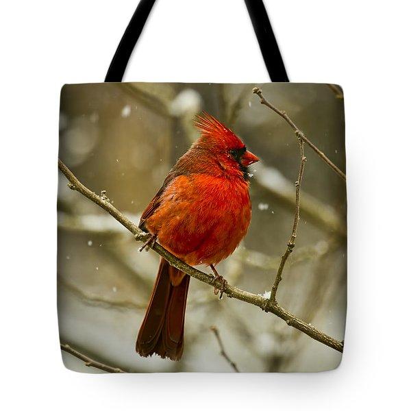 Wintry Cardinal Tote Bag