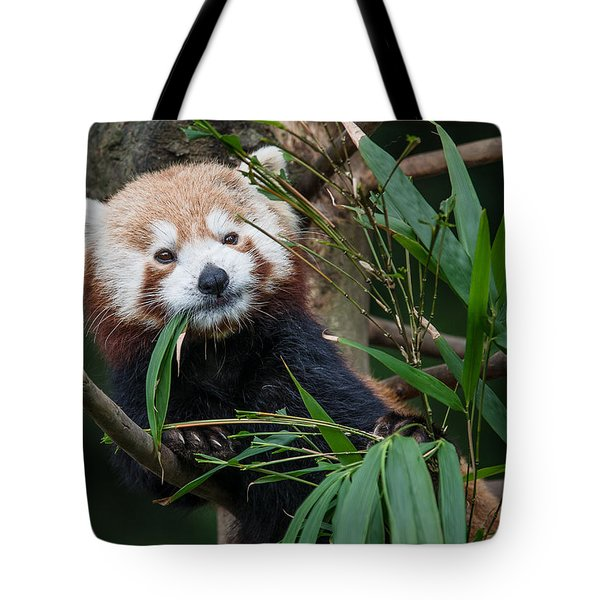 Wizened Red Panda Tote Bag by Greg Nyquist