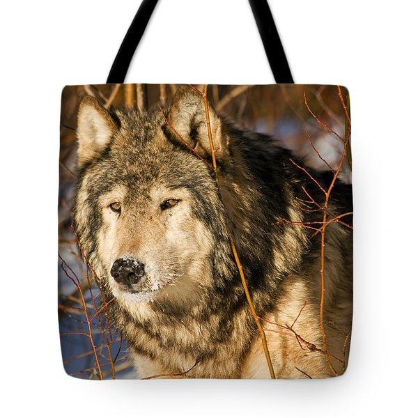 Wolf In Brush Tote Bag