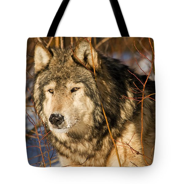 Wolf In Brush Tote Bag