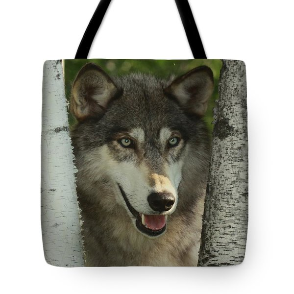 Wolf In The Birch Trees Tote Bag