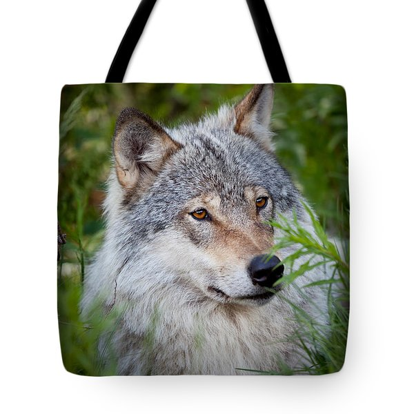 Wolf In The Grass Tote Bag