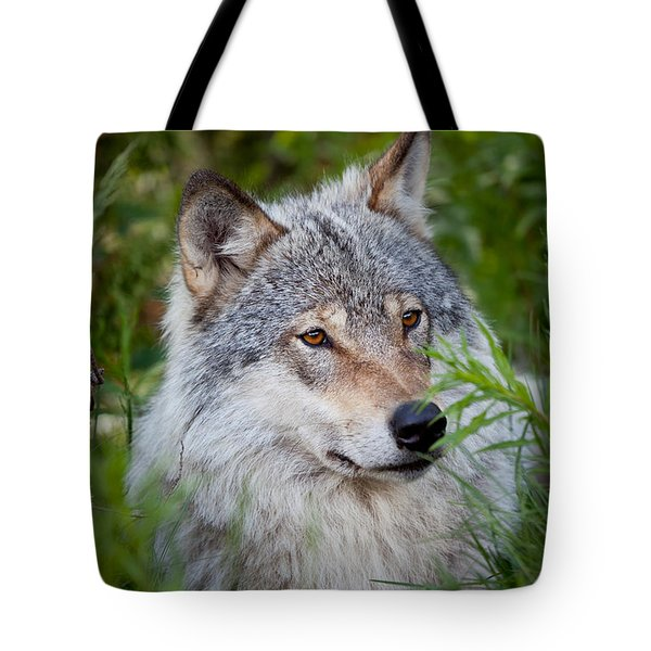 Wolf In The Grass Tote Bag by Yngve Alexandersson