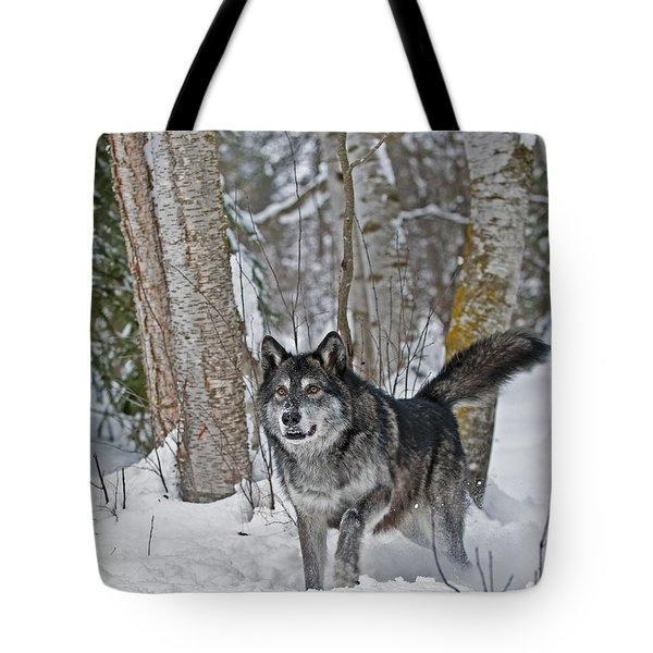 Wolf In Trees Tote Bag