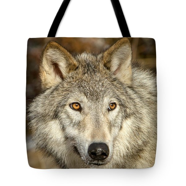 Wolf Portrait Tote Bag by Jack Bell