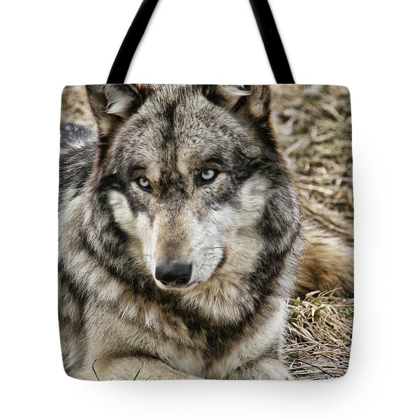 Tote Bag featuring the photograph Wolf Portrait by Shari Jardina