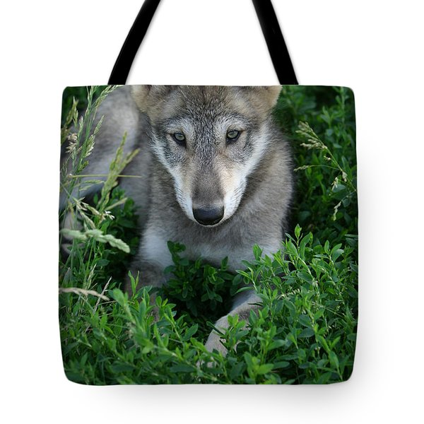 Tote Bag featuring the photograph Wolf Pup Portrait by Shari Jardina