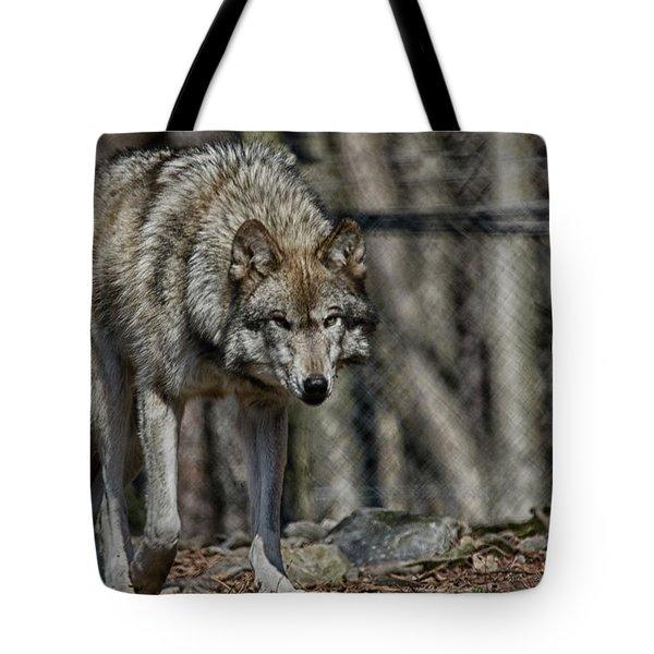 Wolf Stalking Tote Bag