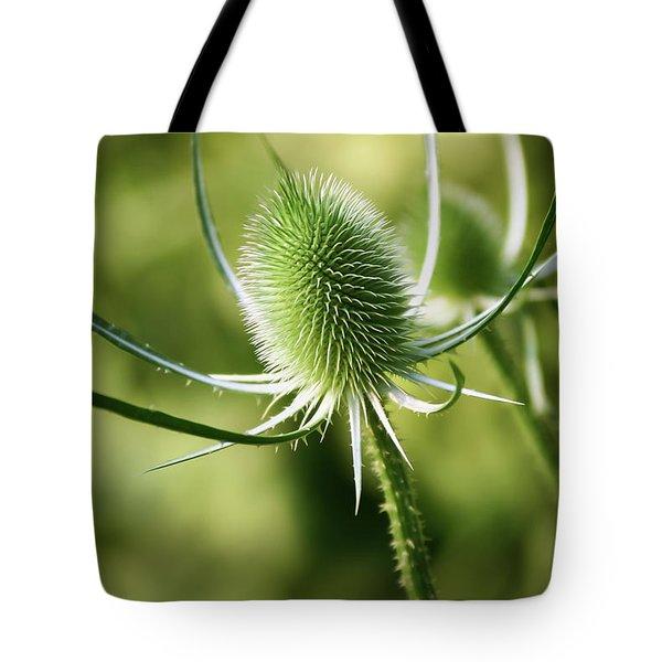 Wonderful Teasel - Tote Bag