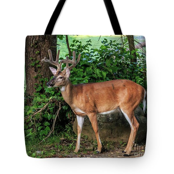 Wondering Deer II Tote Bag