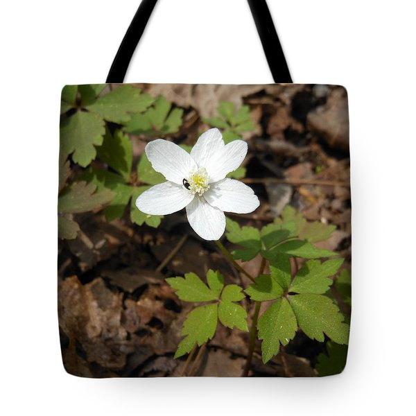Tote Bag featuring the photograph Wood Anemone by Linda Geiger