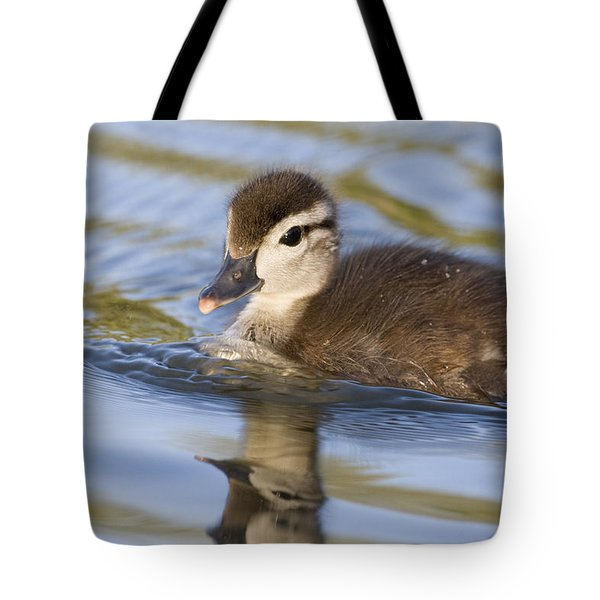 Wood Duck Duckling Swimming Santa Cruz Tote Bag by Sebastian Kennerknecht
