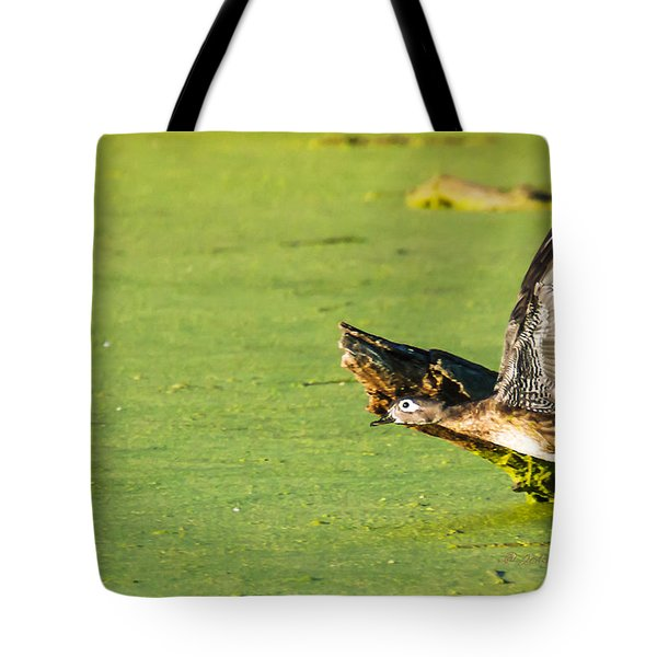 Tote Bag featuring the photograph Wood Duck Hen Takes Flight by Edward Peterson