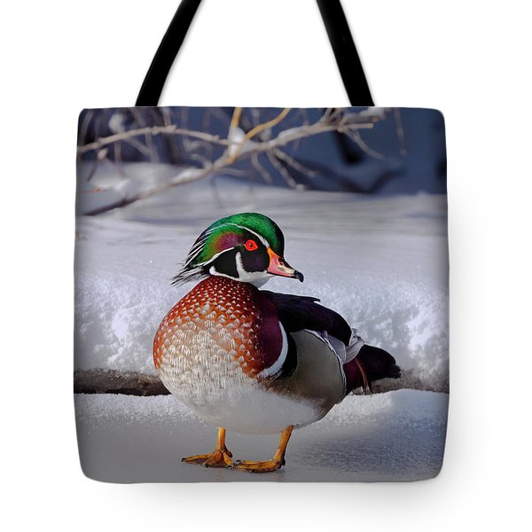 Wood Duck In Winter Snow And Ice, Montana, Usa Tote Bag