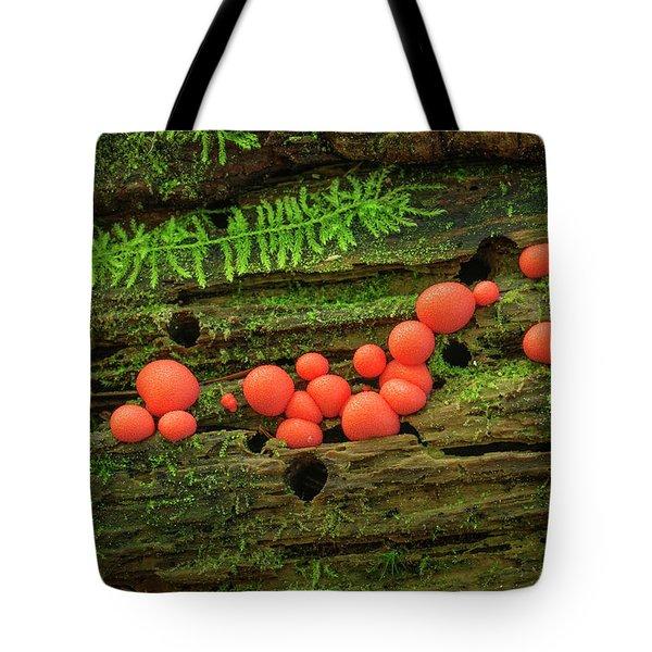 Wood Fungus Tote Bag