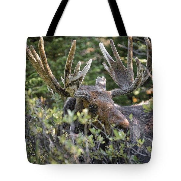 Woodland Moose Tote Bag