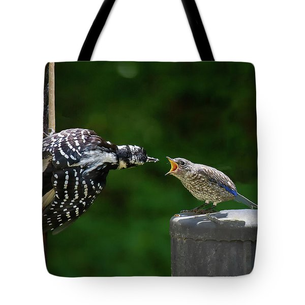 Woodpecker Feeding Bluebird Tote Bag by Robert L Jackson