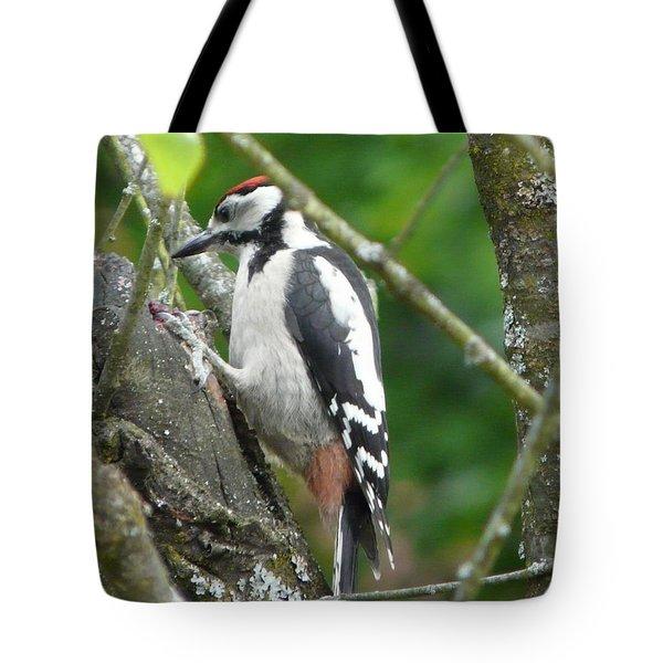 Woodpecker Tote Bag by Valerie Ornstein