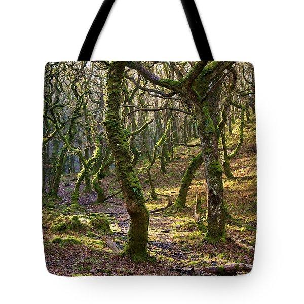 Woods Near Badgeworthy Water Exmoor Tote Bag