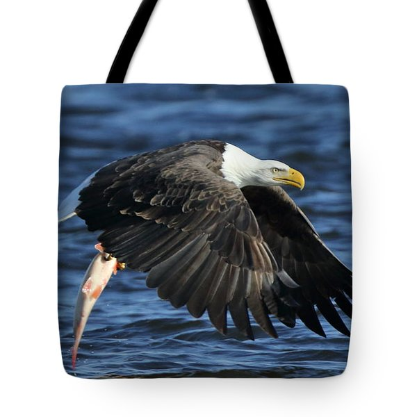 Tote Bag featuring the photograph Working Hard For Dinner by Coby Cooper