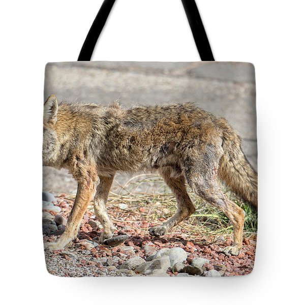 Tote Bag featuring the photograph Worn Down Coyote by Dan McManus