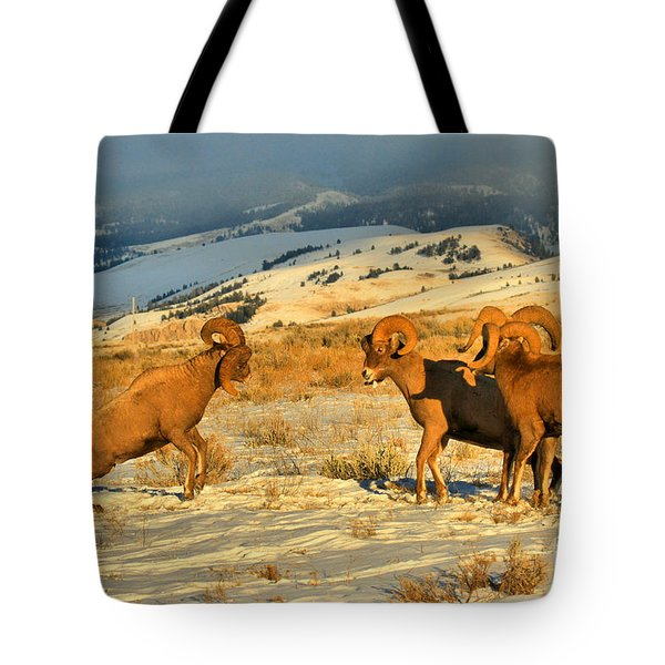 Wyoming Big Horn Brawlers 2 Tote Bag