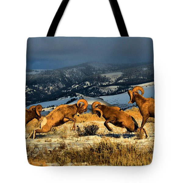 Tote Bag featuring the photograph Wyoming Bighorn Brawl by Adam Jewell
