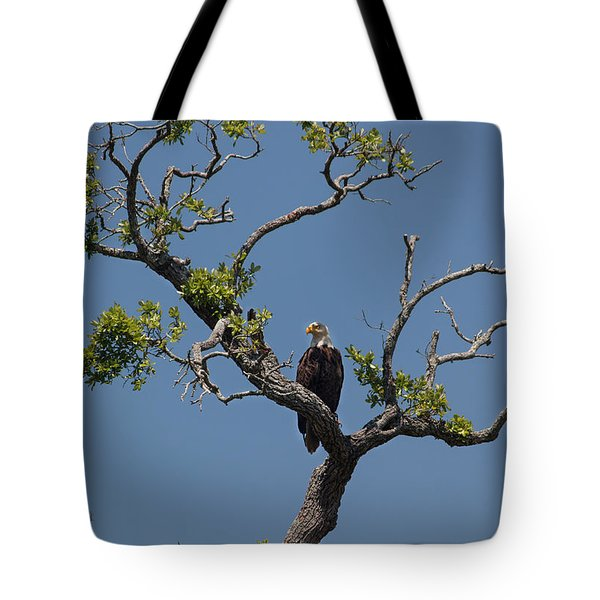 Yawkey Wildlife Reguge - American Bald Eagle Tote Bag by Suzanne Gaff