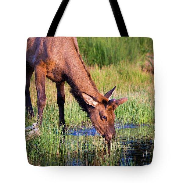 Yearling Elk Tote Bag by Dan Pearce