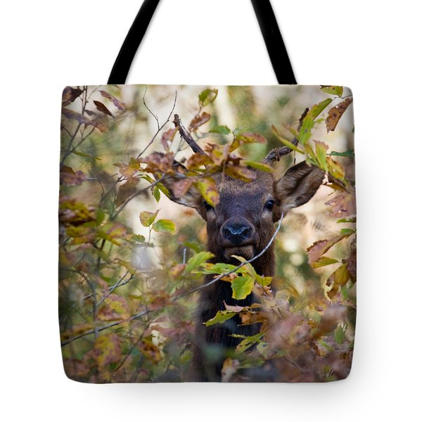 Tote Bag featuring the photograph Yearling Elk Peeking Through Brush by Michael Dougherty