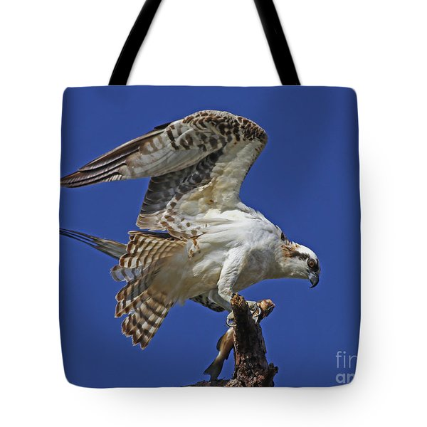 Yearling Osprey Tote Bag