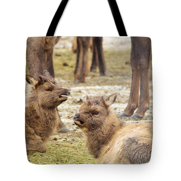 Tote Bag featuring the photograph Yearlings by Jeff Swan