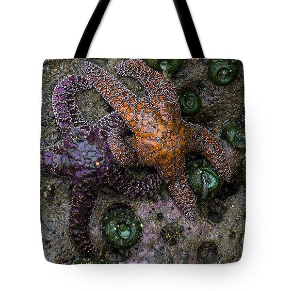 Orange And Purple Starfish II Tote Bag by Chuck Flewelling