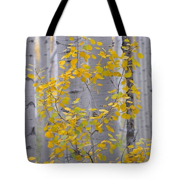 Yellow Aspen Tree Tote Bag