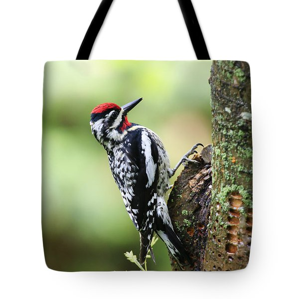 Yellow-bellied Sapsucker Tote Bag by Gary Hall