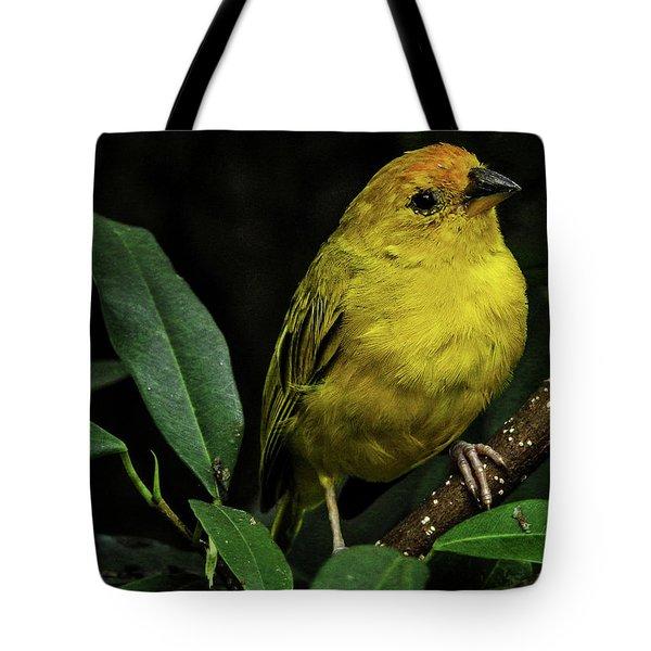 Tote Bag featuring the photograph Yellow Bird by Pradeep Raja Prints
