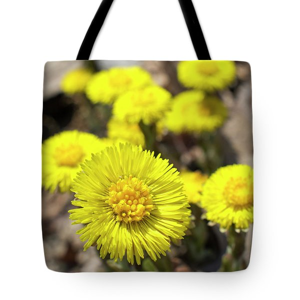 Tote Bag featuring the photograph Yellow Coltsfoot Flowers by Christina Rollo