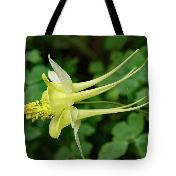 Tote Bag featuring the photograph Yellow Columbine Profile by Jean Noren