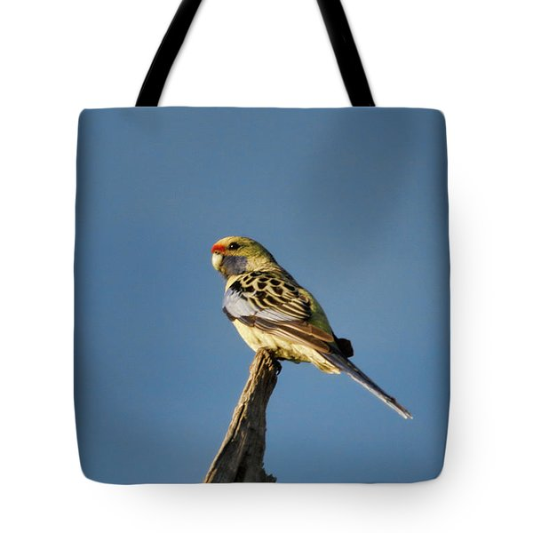 Tote Bag featuring the photograph Yellow Crimson Rosella by Douglas Barnard