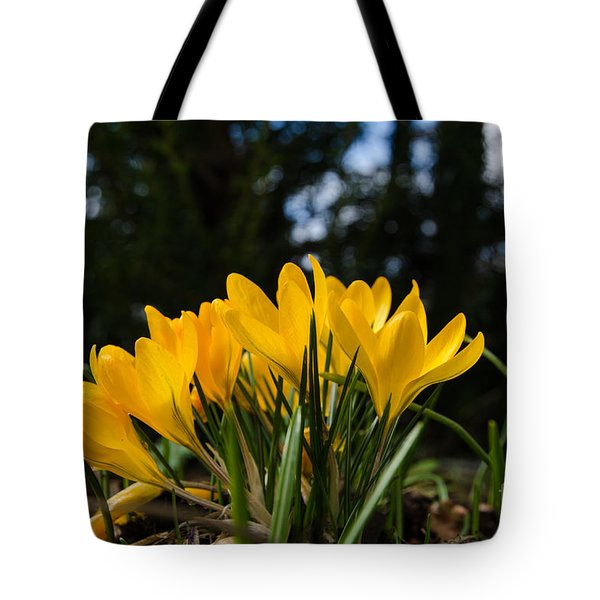 Tote Bag featuring the photograph Yellow Crocus Group by Kennerth and Birgitta Kullman
