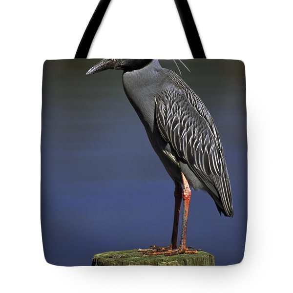 Yellow-crowned Night Heron Tote Bag by Sally Weigand