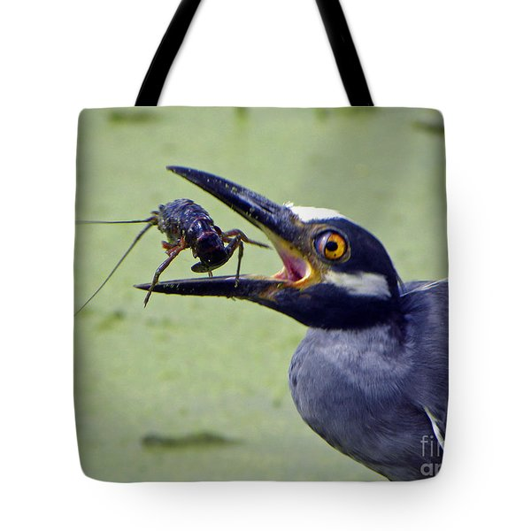 Tote Bag featuring the photograph Yellow Crowned Night Heron  by Savannah Gibbs