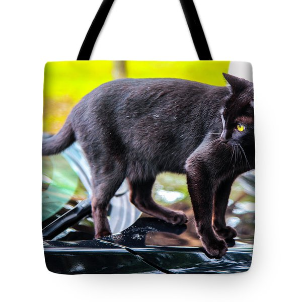 Tote Bag featuring the photograph Yellow Eyed Cat by Madeline Ellis