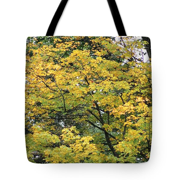 Tote Bag featuring the photograph Yellow Gold Fall Tree by Ellen Barron O'Reilly